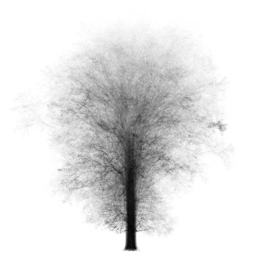 A compilation of 43 trees to form the ghost of One Tree