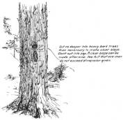 fig25_forest service